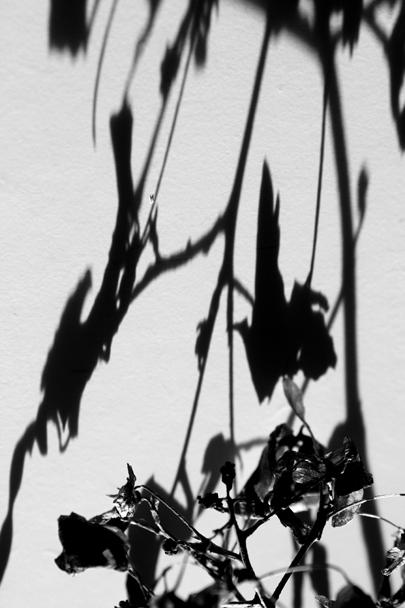 Carolina Koster – A-mild-winter's-harvest